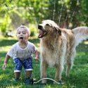 bebeklerde hayvan ilişkisi